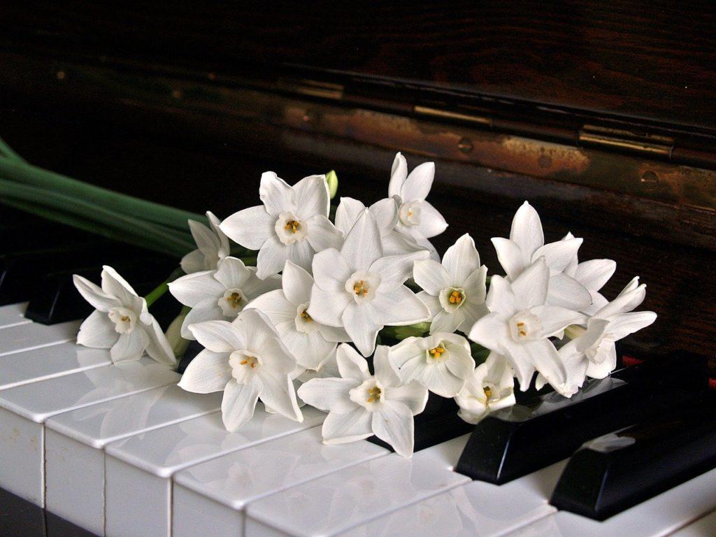 【ピアノ教室の選び方】3つのポイントと確認すべきこととは!?