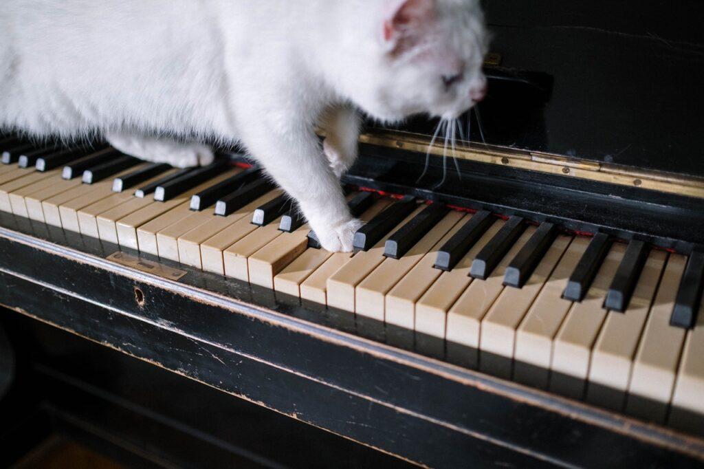 意外と知らない?!「猫踏んじゃった」のピアノ楽譜と豆知識!!